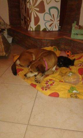 BILLY E WENDY, due cagnolini in spiaggia - Foto 2