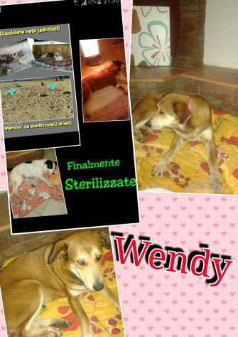 BILLY E WENDY, due cagnolini in spiaggia