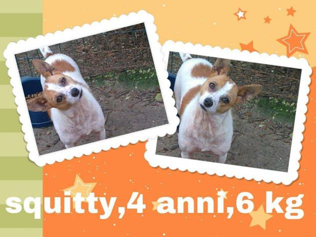 SQUITTY, cagnolina dal carattere speciale