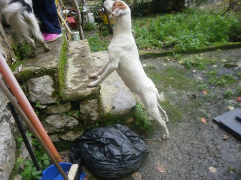 SOLIDEA, giovane cagnolina URGENTE - Foto 5