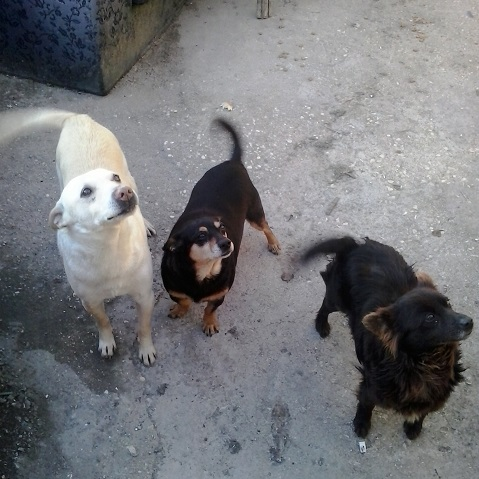 4 dolcissimi cagnolini di taglia piccola
