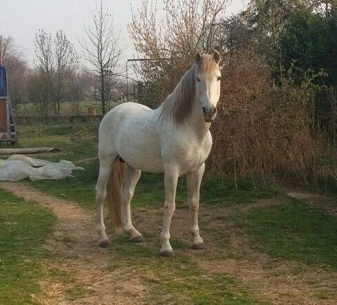 Cavalli Argentini In Regalo.Cavalli In Vendita Annunci Di Cavalli In Vendita Su Bakeca