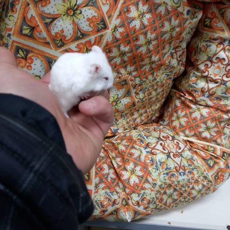 Cuccioli di criceti piccolissimi - Foto 2