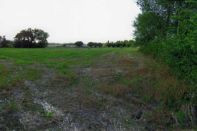 Terreno agricolo in vendita a Treia - Foto 5
