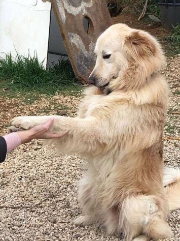 RICKY, cucciolone stupendo