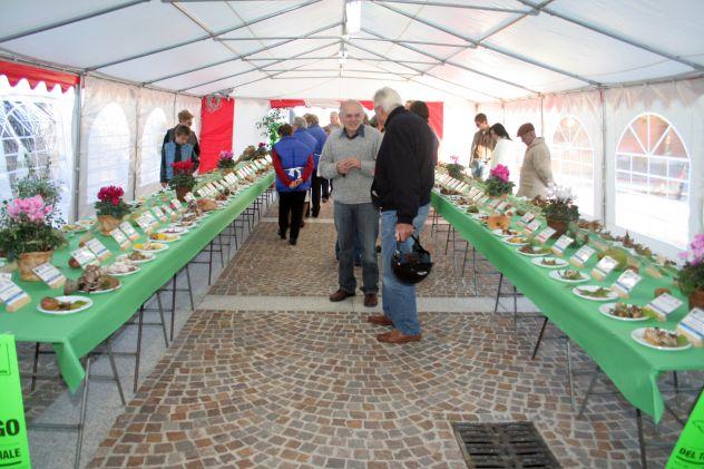 Tendoni per Eventi e Feste, in Pvc Ignifugo  5 x 10  MM italia - Foto 3