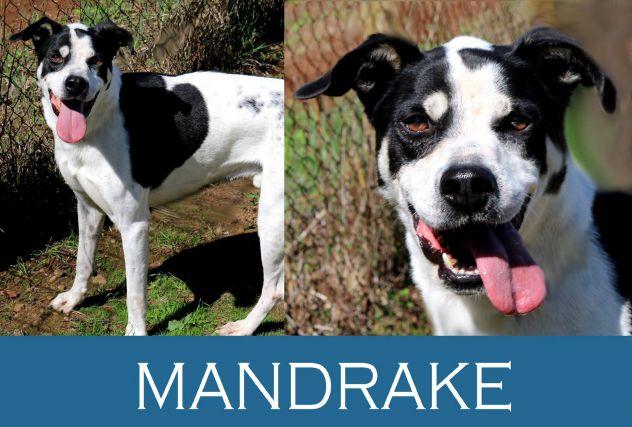 Mandrake ha ripreso fiducia nella vita...