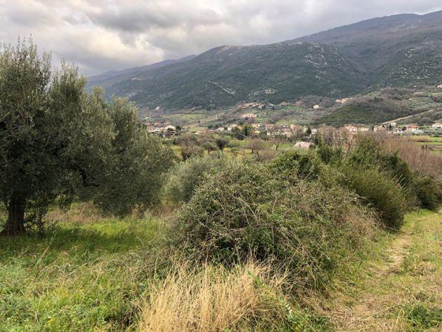 Albanella Terreno agricolo con uliveto - Foto 10