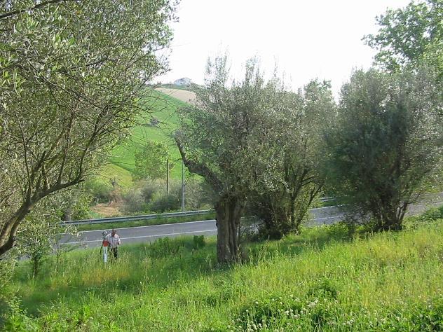 Privato terreno edificabile mq 1100 Euro 65.000 - Foto 3
