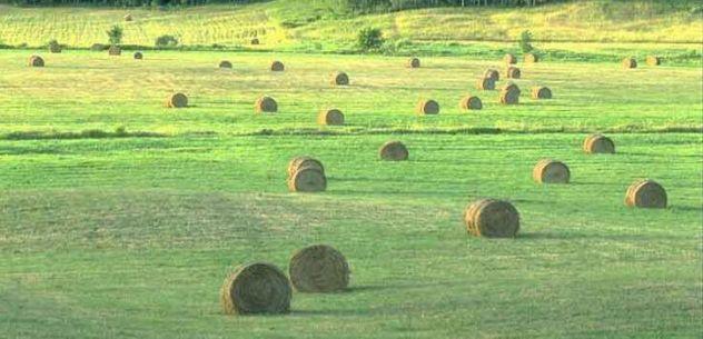 Azienda Agricola 30 km a Ovest di MI - Foto 3