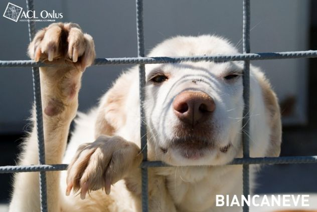 BIANCANEVE, bellissima cagnolona tenera e delicata