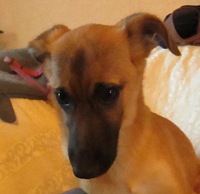 LISA, cucciola dal cuore tenero