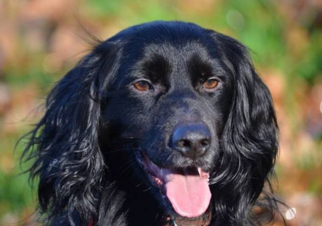 KALI ', fantastico cagnolino in cerca di casa - Foto 3
