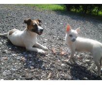 Cani Massa Carrara Annunci Di Cani Cuccioli E Accessori Su Bakeca