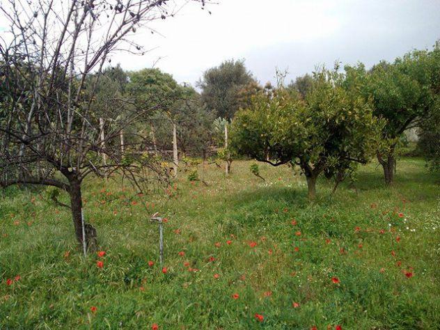 Belpasso terreno agricolo - Foto 2