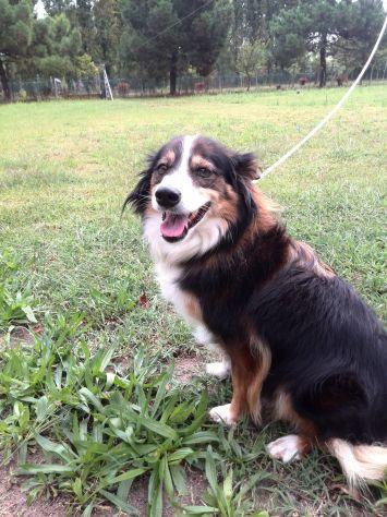 STELLA, bellissima cagnolina - Foto 2