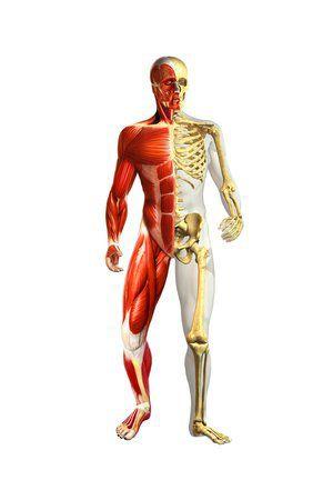 Osteopata anche a domicilio - Foto 2