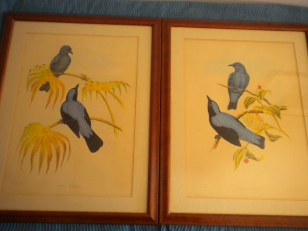 Antiche litografie G. Gould
