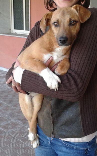 CLEOPATRA, cucciolona tipo bassottino - Foto 4