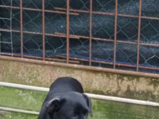 3 dolci cagnolini taglia piccola URGENTE - Foto 2