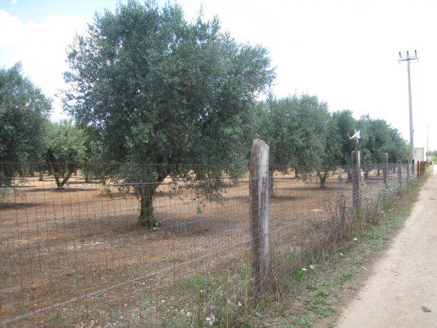 Terreno con ulivi a 900mt dal mare (Maruggio-TA)