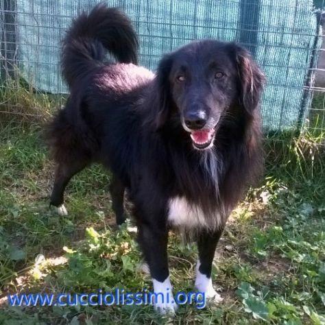 SIMBAD, un cane speciale