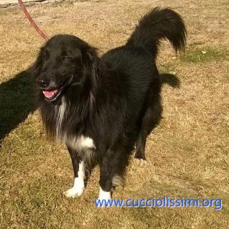 SIMBAD, un cane speciale - Foto 3