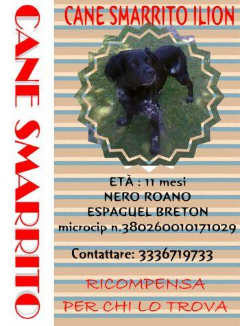 LION, cane da caccia maschio, sparito il 14 maggio 2014 - Foto 3