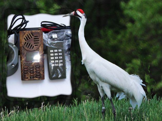 richiamo x uccelli CON telecomando e timer - Foto 4