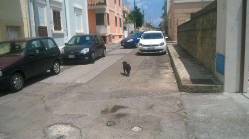 NINO, dolcissimo cagnolino per strada