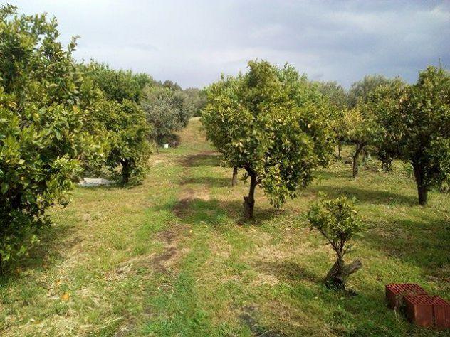 Belpasso terreno agricolo - Foto 4