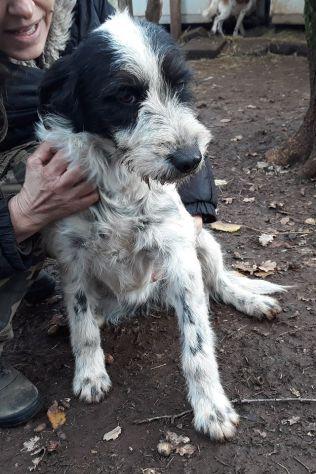 ELENORE, stupenda cucciolotta spinoncina - Foto 3