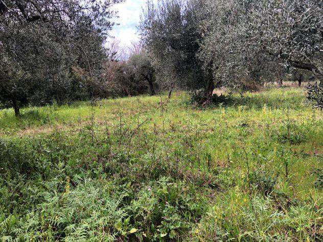 Albanella Terreno agricolo con uliveto - Foto 3