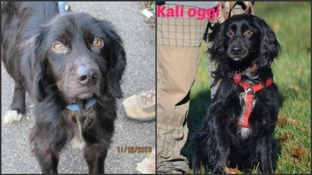 KALI ', fantastico cagnolino in cerca di casa - Foto 4