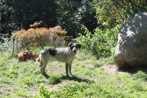 REX, cagnolone buonissimo