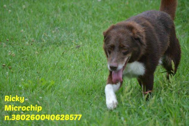 RICKY, socievole cagnolino