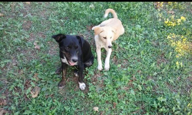 Due cagnoline dolci e affettuose mix labrador - Foto 2