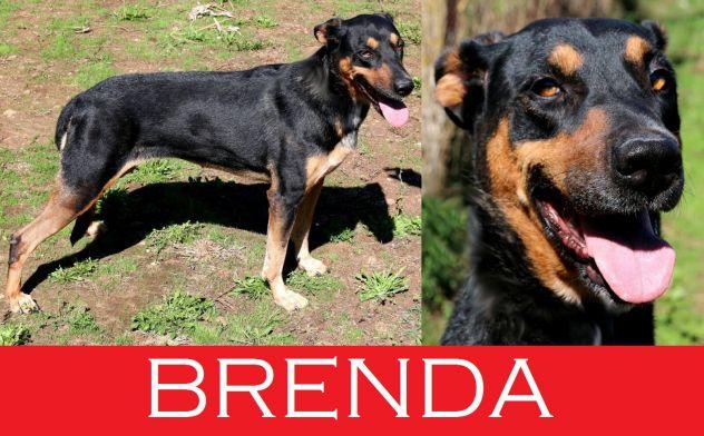 La dolce Brenda, una cagnolona davvero speciale, sono anni che vive in un box