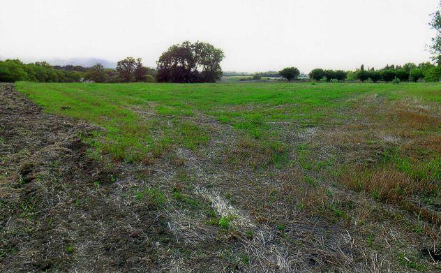 Terreno agricolo in vendita a Treia - Foto 4