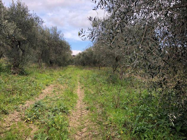 Albanella Terreno agricolo con uliveto