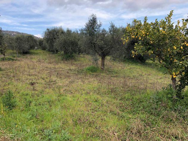 Albanella Terreno agricolo con uliveto - Foto 9