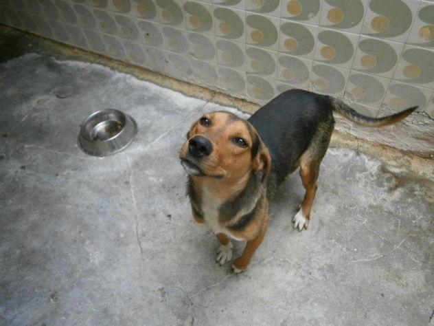 ALVIN, cucciolotto affettuosissimo - Foto 3