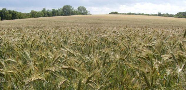 Azienda Agricola 30 km a Ovest di MI - Foto 2