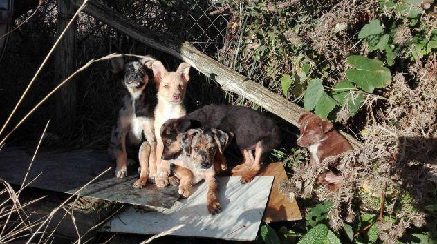 Mamma e 5 cuccioli stupendi in cerca di casa
