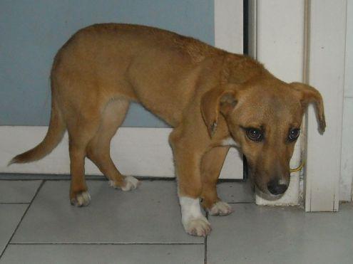 CLEOPATRA, cucciolona tipo bassottino