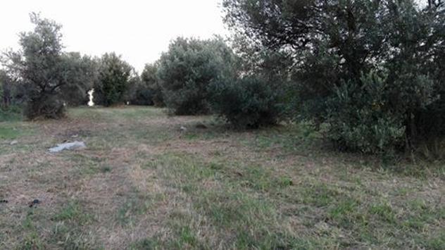 Terreno edificabile / agricolo mq 3630 prezzo euro 99.000 - Foto 4