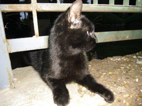 Miciotto nero marsupiale cerca casa - Foto 3