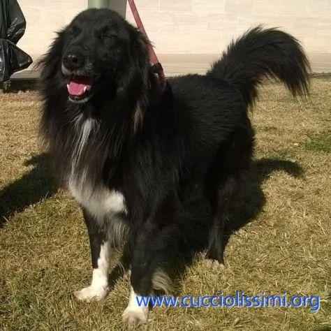SIMBAD, un cane speciale - Foto 2