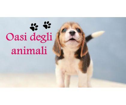 Oasi degli animali -