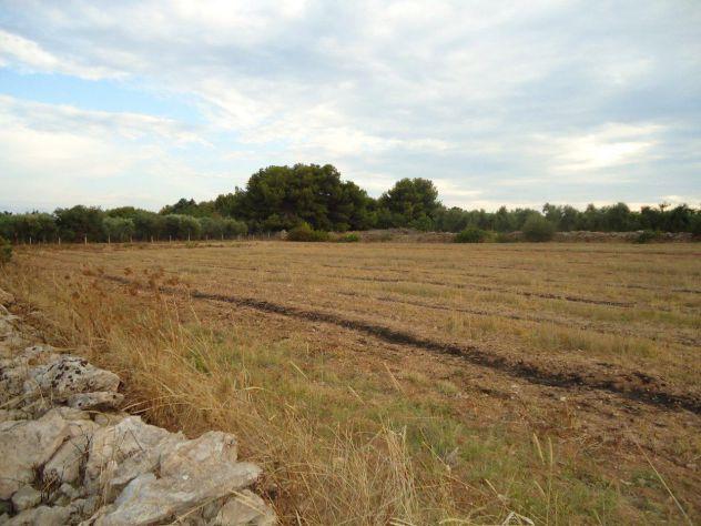 Terreno verde-attrezzato 500mt dal mare a Borraco (Manduria -TA) - Foto 3